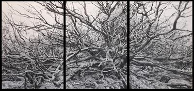 Dartmoor Oaks and Rocks, Burrator Triptych II