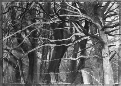 Beeches at Maristow by Kevin Tole, Drawing, Charcoal on Paper