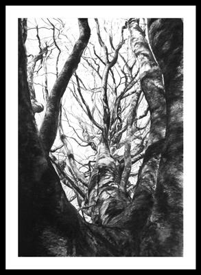 Clearbrook Beech, Cthulhu (Fagus silvatica) by Kevin Tole, Drawing, Beech Charcoal, White Charcoal, Black and White conte