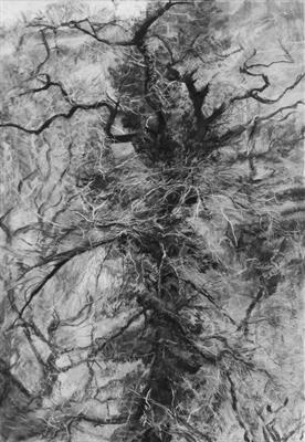 Danescombe Oak, Quercus robur #29 by Kevin Tole, Drawing, Beech Charcoal, Compressed Charcoal, White Conte, White Charcoal