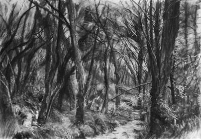 Danescombe Valley Stream by Kevin Tole, Drawing, Beech Charcoal, compressed charcoal, white charcoal
