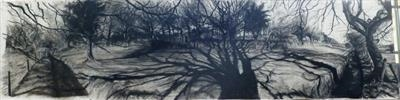 Fagus silvatica Field by Kevin Tole, Drawing, Beech Charcoal, various compressed charcoals, white, charcoal, white conte