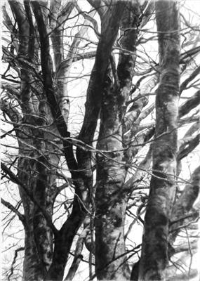 No. 14 Winter Beech by Kevin Tole, Drawing, Charcoal and pastel on paper