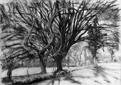 No. 24 by Kevin Tole, Drawing, Home made Beech Charcoal, compressed charcoal and white Conte