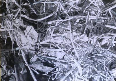 No. 27 by Kevin Tole, Drawing, Beech Charcoal, white charcoal, carbon stick and conte