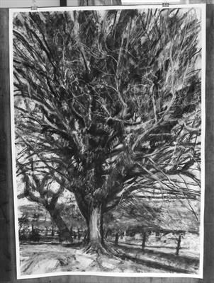 No. 32 by Kevin Tole, Drawing, Beech Charcol, compressed charcoal, white and black conte