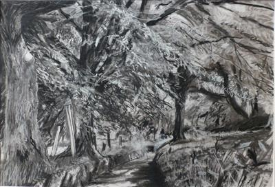 No. 36 by Kevin Tole, Drawing, Beech Charcol, compressed charcoal, white charcoal