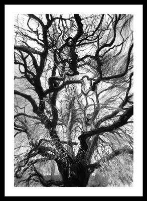 Paleisstraat Den Haag Horse Chestnut (Aesculus hippocastanum by Kevin Tole, Drawing, Beech Charcoal, compressed charcoal, white charcoal