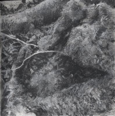 Roots, Moss, Twigs and Leaves. by Kevin Tole, Drawing, Charcoal, conte and Pastel on paper