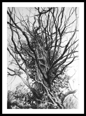Saltram Blasted Oak (Quercus robur) by Kevin Tole, Drawing, Beech Charcoal, White Charcoal, Black and White conte