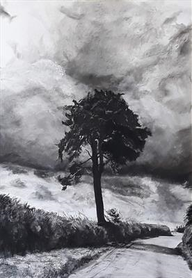 Sentinel; Scots Pine (Pinus sylvestris) above Messums, Wilts by Kevin Tole, Drawing, Charcoal and Chalk on paper